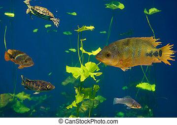 cichlids, maya, riviera, sinkhole, cenote, 魚