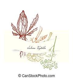 cichorei, boerenkool, dille, groentes, hand, herfst, getrokken
