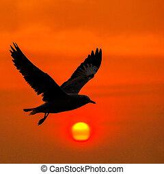 cichy, przelotny, scena, seagull, sunse