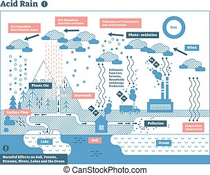 ciclo, naturaleza, ecosistema, lluvia, infographic, ácido,...