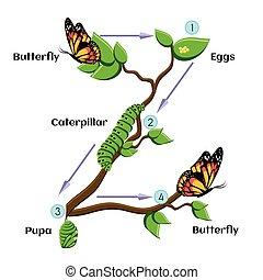 ciclo vida, butterfly.