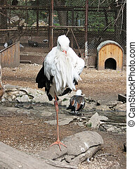 cicogna, one-legged