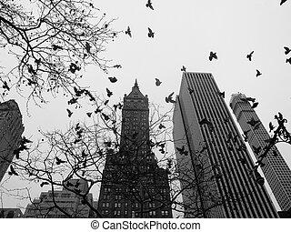 cidade,  central, parque, pretas,  York, Novo, branca