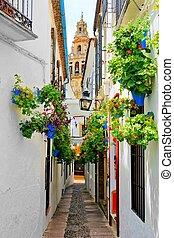 cidade, flor, antigas, rua, enchido, catedral, cordoba, torre, espanha