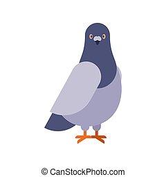 cidade, isolated., pombo, cinzento, ilustração, vetorial, frente, pomba, pássaro, vista