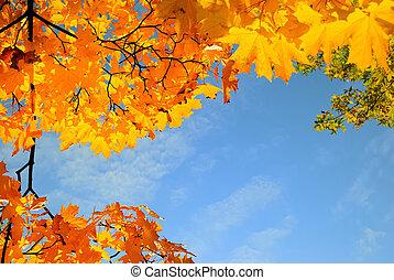 cidade, sol, folhas, parque, quadro, dia, maple