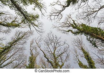 ciel, arbres, atteindre