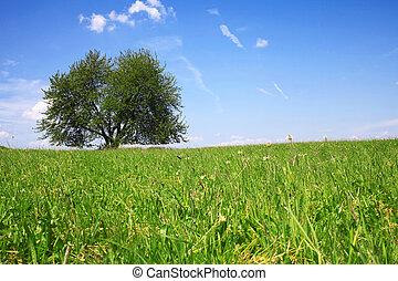 ciel bleu, arbre, champ
