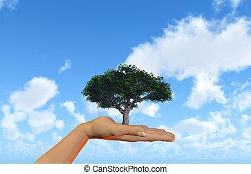 ciel bleu, arbre, contre, possession main