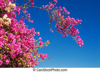 ciel bleu, arbre, fond, fleurir, fleurs, rouges
