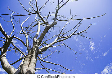 ciel bleu, arbre, mort