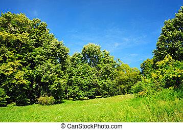 ciel bleu, arbres verts