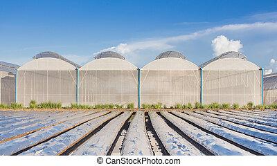 ciel bleu, champ, serre, agriculture, vue