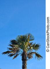 ciel bleu, clair, arbre, paume, fond