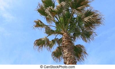 ciel bleu, contre, palmier
