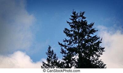 ciel bleu, dramatique, arbre, backlit