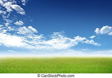 ciel bleu, ensoleillé, champ, arrière-plan vert, herbe