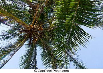ciel bleu, feuilles, arbre, contre, paume