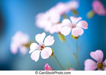 ciel bleu, fleur, dof., contre, pâquerette