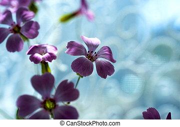 ciel bleu, fleur, dof., printemps, contre, pâquerette, fleurs