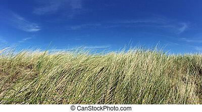 ciel bleu, marram, clair, devant, herbe