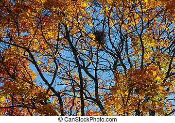 ciel bleu, nid, arbre, contre, automne, oiseau, coloré