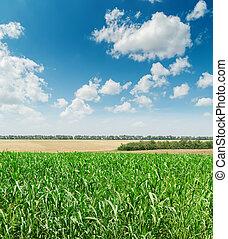 ciel bleu, nuageux, champ, vert, agriculture