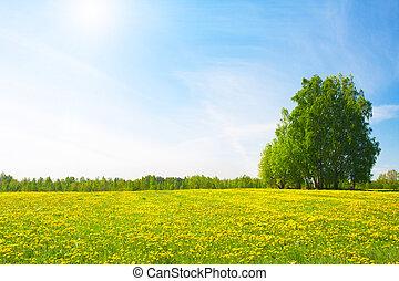 ciel bleu, nuageux, jaune, sous, fleurs, colline