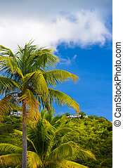 ciel bleu, palmiers