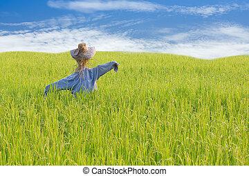 ciel bleu, riz, épouvantail, champ