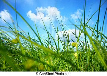 ciel bleu, vert, sous, frais, herbe