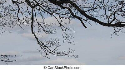 ciel, branche arbre, contre