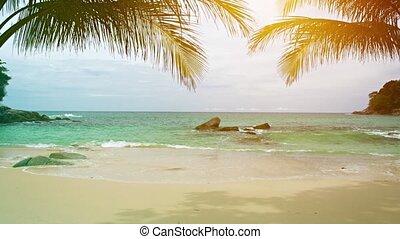 ciel, feuilles, ensoleillé, exotique, paume, fond, plage
