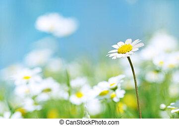 ciel, fleurs ressort, bleu