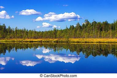 ciel, forêt, reflet