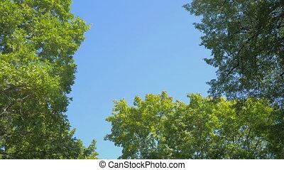 ciel, forêt, surmontez, regard, jour, vue, ensoleillé, bleu