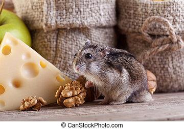 ciel, -, garde-manger, rongeur, hamster, souris, ou