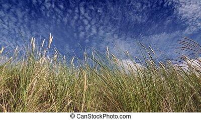 ciel, herbe, plume