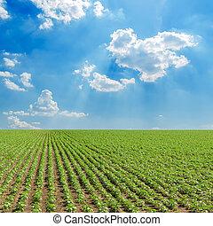 ciel, nuageux, champ, tournesols, sous, vert