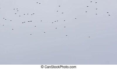 ciel nuageux, voler, oiseaux