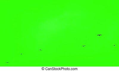 ciel, oiseaux, vert, écran