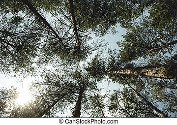 ciel, papier peint, nuages, forêt, arbres