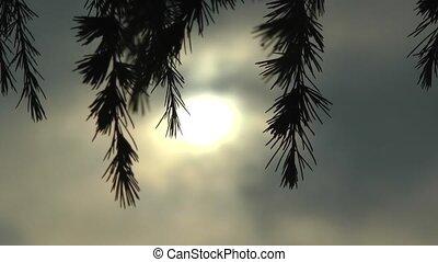 ciel, sombre, arbre pin