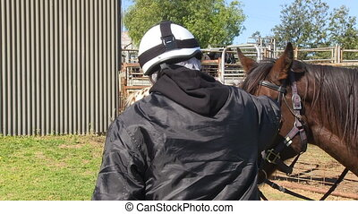 cielna, koń, petting, brązowy