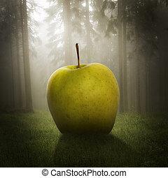 cielna, las, jabłko
