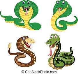 cielna, różny, wyrażenie, węże, zbiór