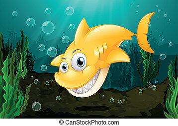 cielna, rekin, żółty