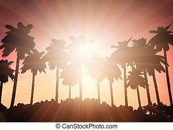 cielo, albero, contro, palma, tramonto, paesaggio