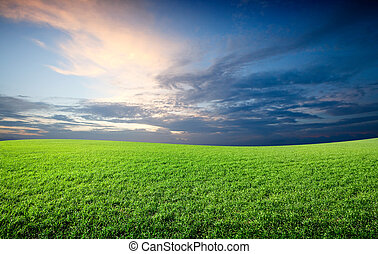 cielo azul, campo, verde, debajo, fresco, pasto o césped