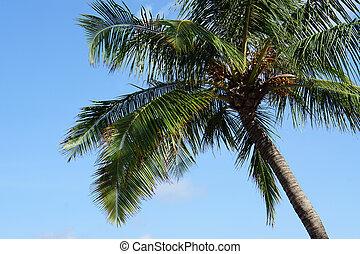 cielo azul, claro, árbol, palma, plano de fondo, tailandia